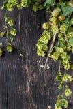 Зеленые хмель и уши ячменя Стоковое Изображение