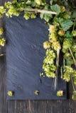 Зеленые хмель и уши ячменя Стоковые Изображения