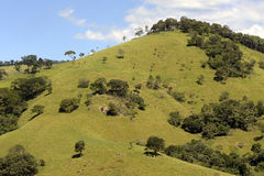 Зеленые холмы на сумраке стоковые фотографии rf