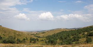 Зеленые холмы с деревьями стоковые фотографии rf