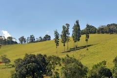 Зеленые холмы с соснами стоковое фото