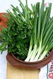 Зеленые цвета весны Стоковые Фото