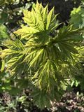 Зеленые цвета весны Стоковая Фотография RF