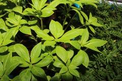 Зеленые цвета весны Стоковые Изображения RF