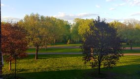 Зеленые цвета и коричневые цвета Стоковое Изображение