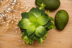 Зеленые цвета и полагаются Стоковые Фото