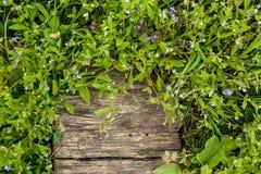 Зеленые цвета и цветки на деревянной предпосылке Стоковое Фото