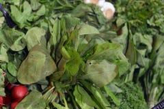 Зеленые цвета и щавель Стоковые Фотографии RF