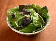 Зеленые цвета салата Стоковые Изображения