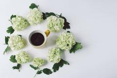 Зеленые цветки с листьями в форме круга лежа вокруг желтой чашки кофе Стоковое Изображение RF