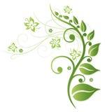 Зеленые цветки Стоковое Изображение