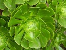 Зеленые цветки Стоковые Изображения RF