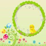 Зеленые цыпленок пасхи & предпосылка яичек Стоковое фото RF