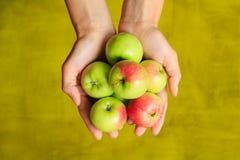Зеленые яблоки в руках женщины на зеленой предпосылке Стоковое Фото