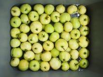 Зеленые яблоки лета в раковине Стоковое Фото