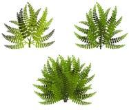 Зеленые bushes Стоковые Изображения