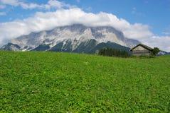 Зеленые gras Стоковые Фото
