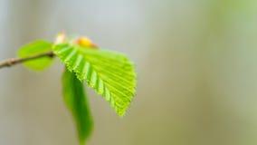 зеленые leafes Стоковые Фото