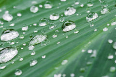 зеленые raindrops листьев Стоковая Фотография