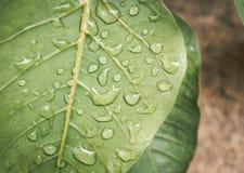 зеленые raindrops листьев Стоковые Фотографии RF