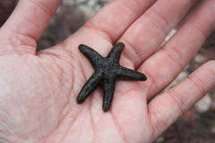 зеленые starfish Стоковые Фотографии RF