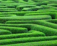 зеленый лабиринт стоковые изображения