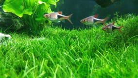 Зеленый аквариум Стоковое Изображение RF