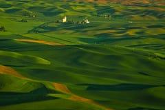 Зеленый ландшафт страны в Palouse, Вашингтоне Стоковое Изображение