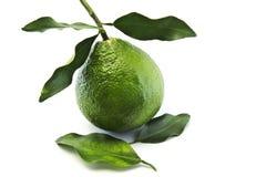 Зеленый апельсин с зелеными лист на белой предпосылке Стоковое Изображение