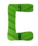 Зеленый алфавит текстуры лист Стоковая Фотография RF