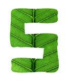 Зеленый алфавит текстуры лист Стоковые Фотографии RF