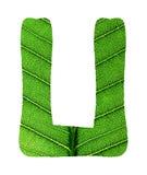 Зеленый алфавит текстуры лист Стоковое фото RF