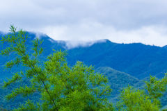Зеленый бамбук в природе стоковое изображение