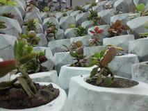 Зеленый бетон развевает заказ Стоковая Фотография