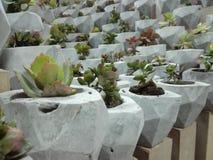 Зеленый бетон развевает заказ стоковые фотографии rf