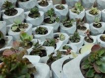 Зеленый бетон стоковые фото