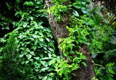 зеленый вал листьев Стоковая Фотография