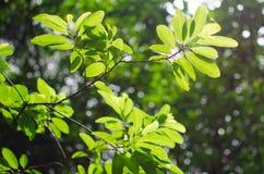 зеленый вал листьев Стоковое Изображение RF
