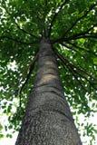зеленый вал парка Стоковые Фотографии RF