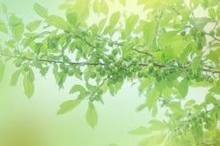 зеленый вал слив Стоковое Изображение