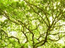зеленый вал Стоковое Изображение