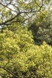 зеленый вал Стоковые Изображения