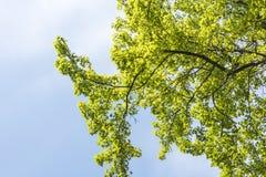зеленый вал Стоковое фото RF