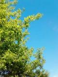 зеленый вал Стоковая Фотография