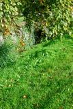 зеленый вал Стоковое Фото