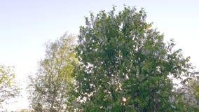 зеленый вал steadicam Ровное движение камеры видеоматериал