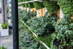 зеленый вектор бака завода иллюстрации Стоковое Изображение
