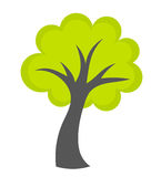 Зеленый вектор дерева Стоковые Изображения RF