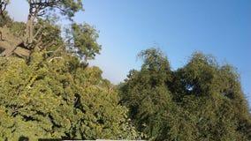 Зеленый взгляд сельского дома Стоковая Фотография