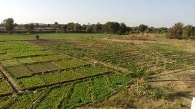 Зеленый взгляд сельского дома Стоковые Фотографии RF
